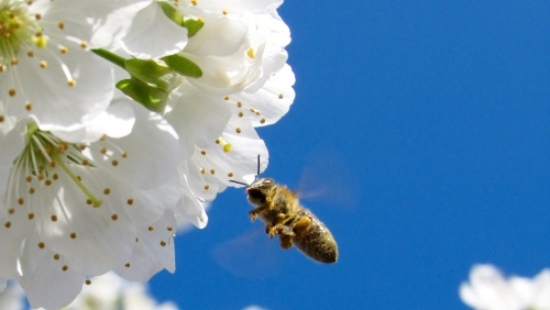losing pollinators
