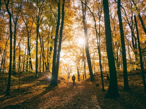 photo-fall_aaron_burden